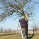 Referenzen-Obstbaumschnitt (1)