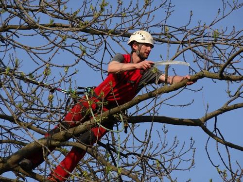 Baumpflege in Leipzig: Seiltechnik Leese ist Ihr Partner für Baumpflege in Leipzig. Chris Leese arbeitet in einer Baumkrone.